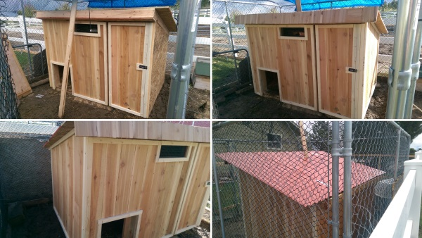 Chicken Coop Finish 600