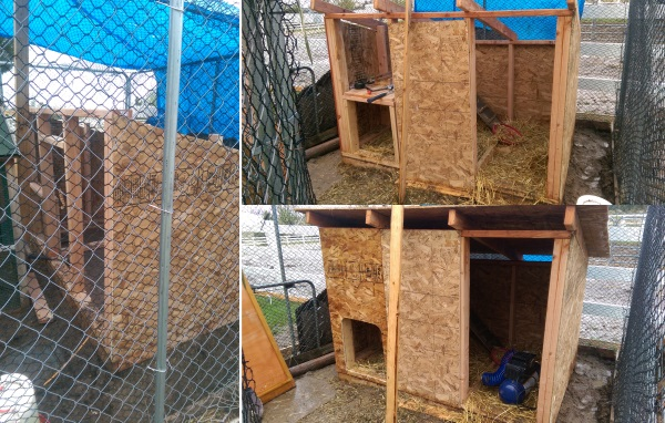 Chicken Coop OSB Walls