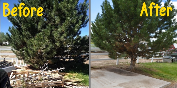 Before and After Fire Mitigation