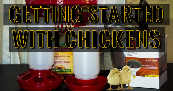 Getting Started With Chickens and Supplies