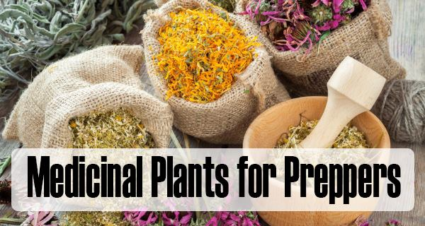 medicinal plants for preppers